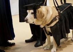 بعد عناء طويل .. كلب يحصل على درجة الماجستير في العلوم !