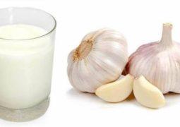 فوائد رائعة لصحتك من وصفة الثوم مع اللبن