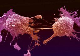 مأكولات … قد تسبّب السرطان