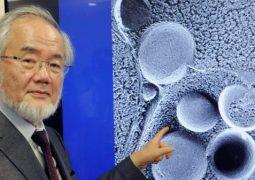 جائزة نوبل بالطب تمنح لمكتشف آليات تجدد الخلايا