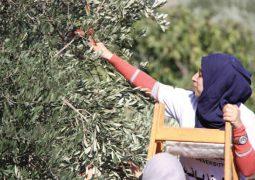 نفط فلسطين الأخضر وذهبه الأصفر