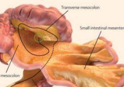 عضو بجسم الإنسان قد يكون سببا في السرطان