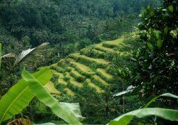 شركة نيرفانا للسفر و السياحة تطلق عروضاً  خاصة لقضاء العطلات في أندونيسيا