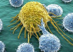 فيتامين (سي) يقتل الخلايا الجذعية للسرطان