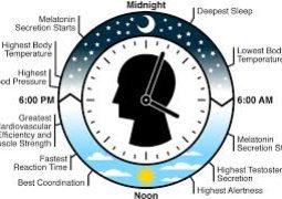 ساعة الجسم البيولوجية هل هي  المسؤولة عن زيادة الوزن