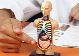 حقائق غريبة ومثيرة لا نعرفها عن أجسامنا..!