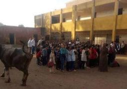 جاموسة في طابور الصباح في مدرسة مصرية