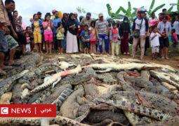 قرويون يقتلون نحو 300 تمساح في هجوم انتقامي