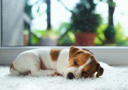 تحذير الكلاب.. قد تصيبك ببكتيريا قاتلة